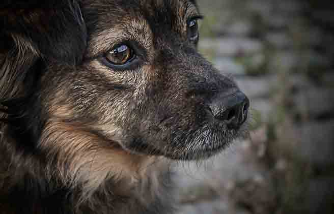 End of Life Care for Pets Longmont