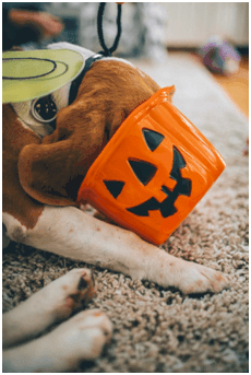 halloween and pets longmont